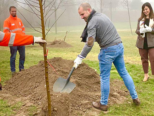 Plantación de árboles en Majadahonda